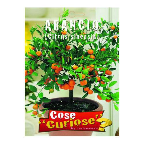Sjeme naranče