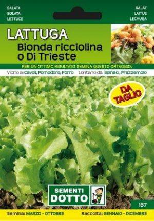 Salata Bionda Ricciolina