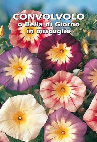 Sjeme šareni slak cvijeće