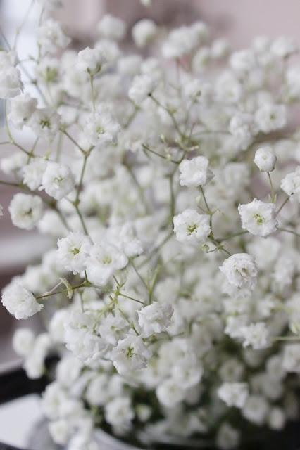 Sjeme Šlajer cvijeće