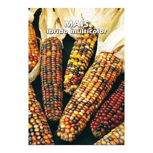 Sjeme šareni kukuruz