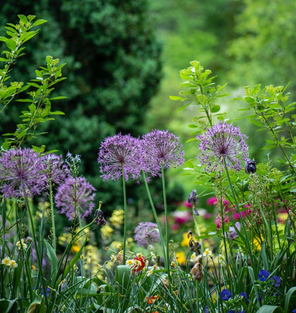 Biljke u sjeni