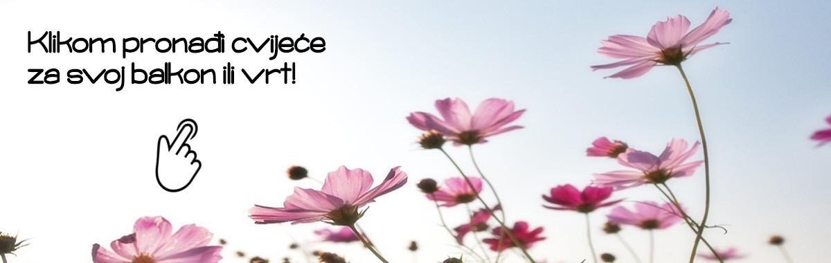 Sjeme cvijeća VIXA
