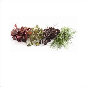 Mikro povrće & Klice