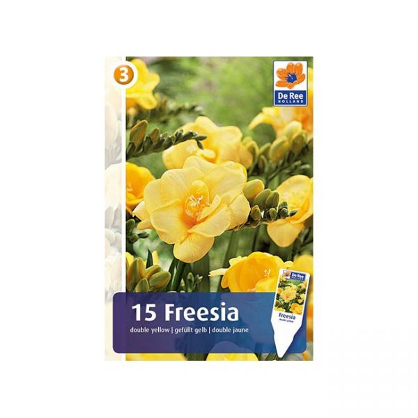 Vixa lukovice Freesia kupovina