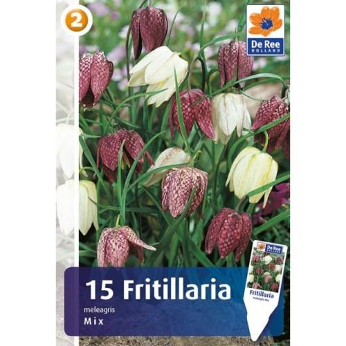 Lukovice Fritillaria melagris kupovina webshop